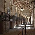 Ecurie de Versailles