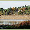 Roselière Lac d'Aureilhan 2