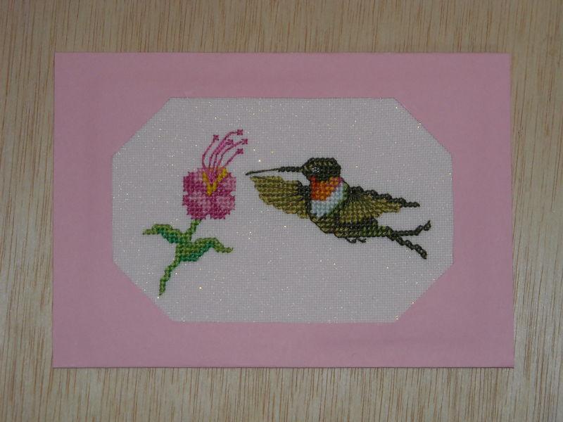 Colibri en rose