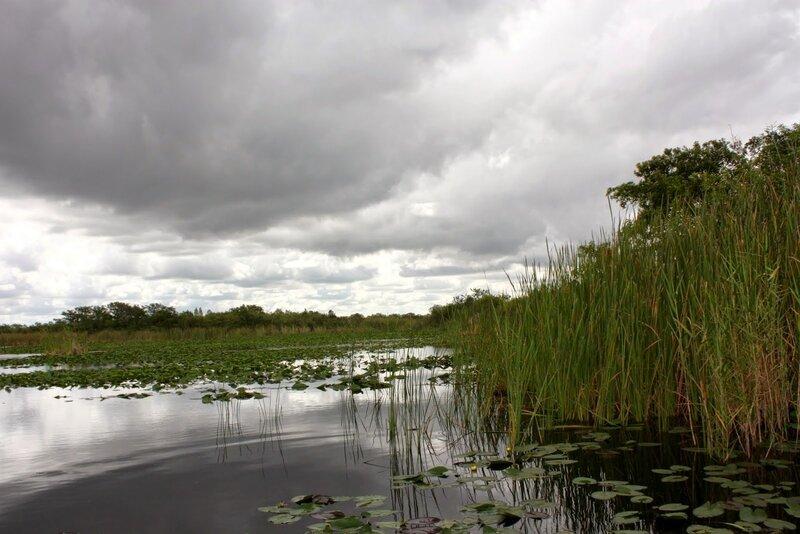 J24 - 21 juillet 2014 Everglades (147).JPG