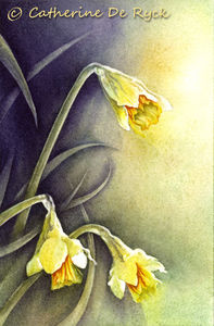 Jonquilles_Sauvages_WIP_4_