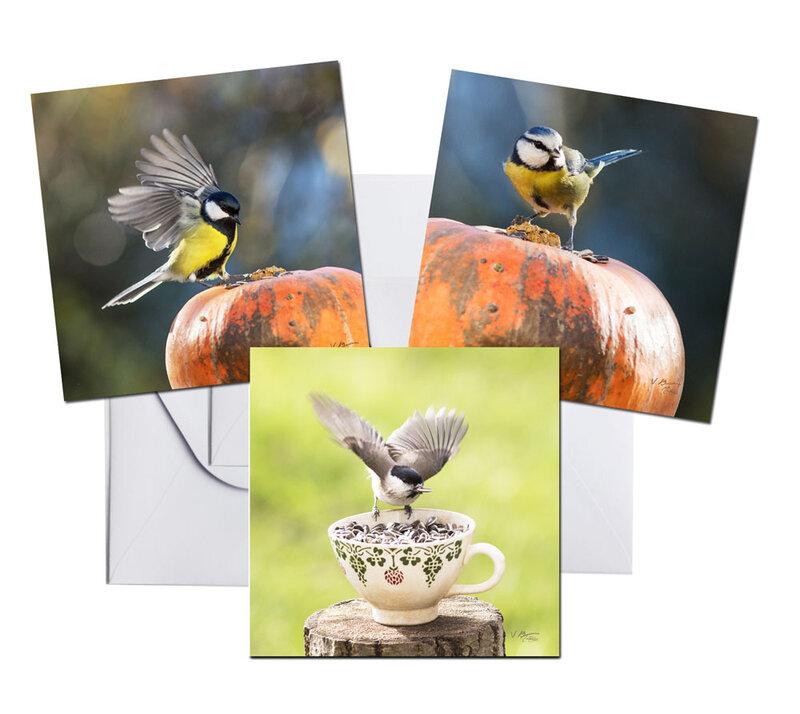 cartes-oiseaux-03