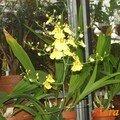 Jardin d'orchidée - luxembourg