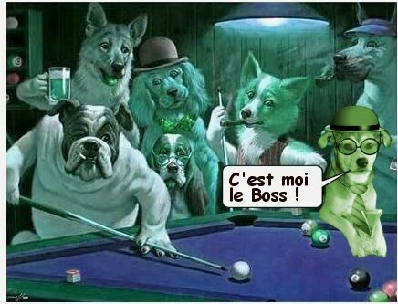 chiens_billard_tom_2_bulle