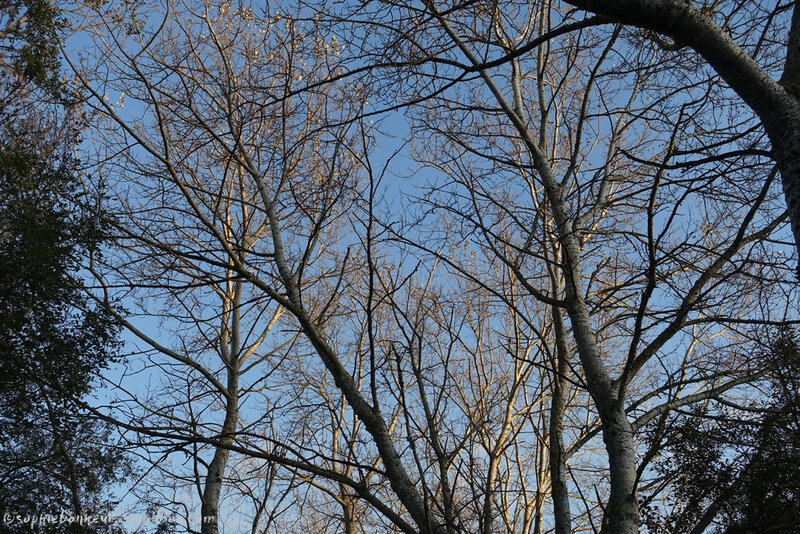 automne branches