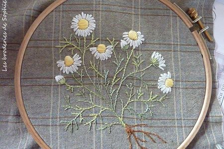 Bouquet de camomille (1)