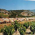 99 Languedoc