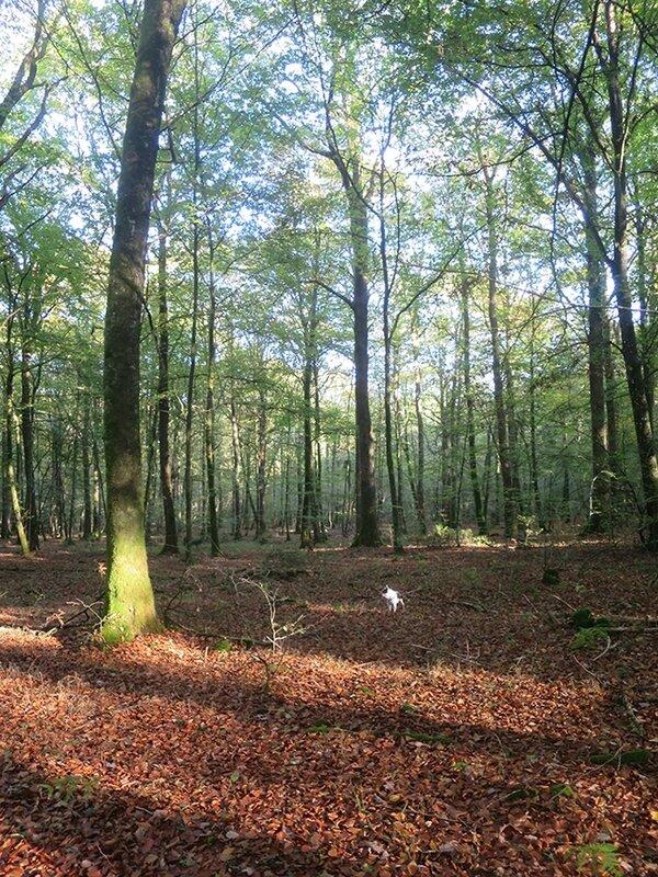 forêt a