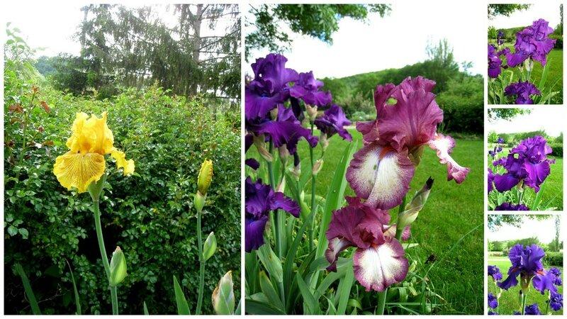 Jardin 2014-05-10_1