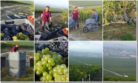 vendanges 2019 bis