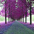 chemin violet