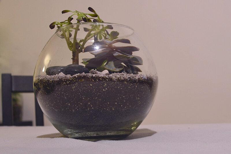Succulentes 02