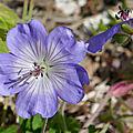 Fleur 55