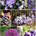 Camaïeux de violet