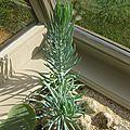 PLANTE GRASSE 14