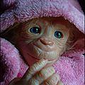 AA-Bonnie bébé singe adoptée -adopted