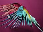 perroquet_slve_sundsb_3