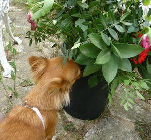 FIDJI , la chienne de Mrs SYLVIA