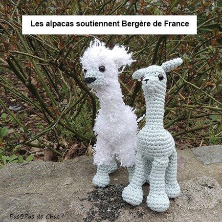 alpaca-03-pasapasdechat