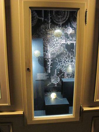 2 juin 11 - Musée Hist Nat - Genève (37)