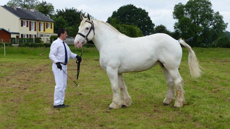 Aurore de Bernaville - 12 Juin 2016 - Concours d'élevage local - Bernaville - 1ere (Non Suitées)