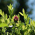 Chroniques d'un printemps paresseux - 1