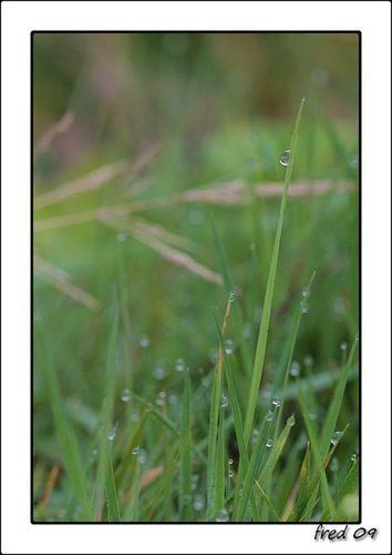 perles de pluies