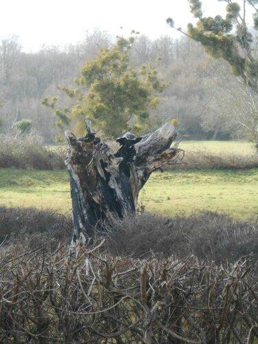 arbre mort superbe11001873_416706715159621_3322367368467714883_n