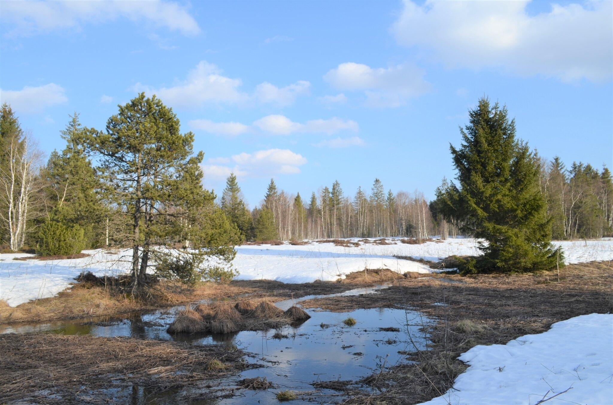 Les étangs en hiver