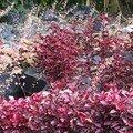 jardin volcanique1