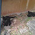 petite maman chatte jetée avec ses 3 chatons aux Abymes 2