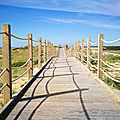 Labenne-Océan, sentier de la dune (40)