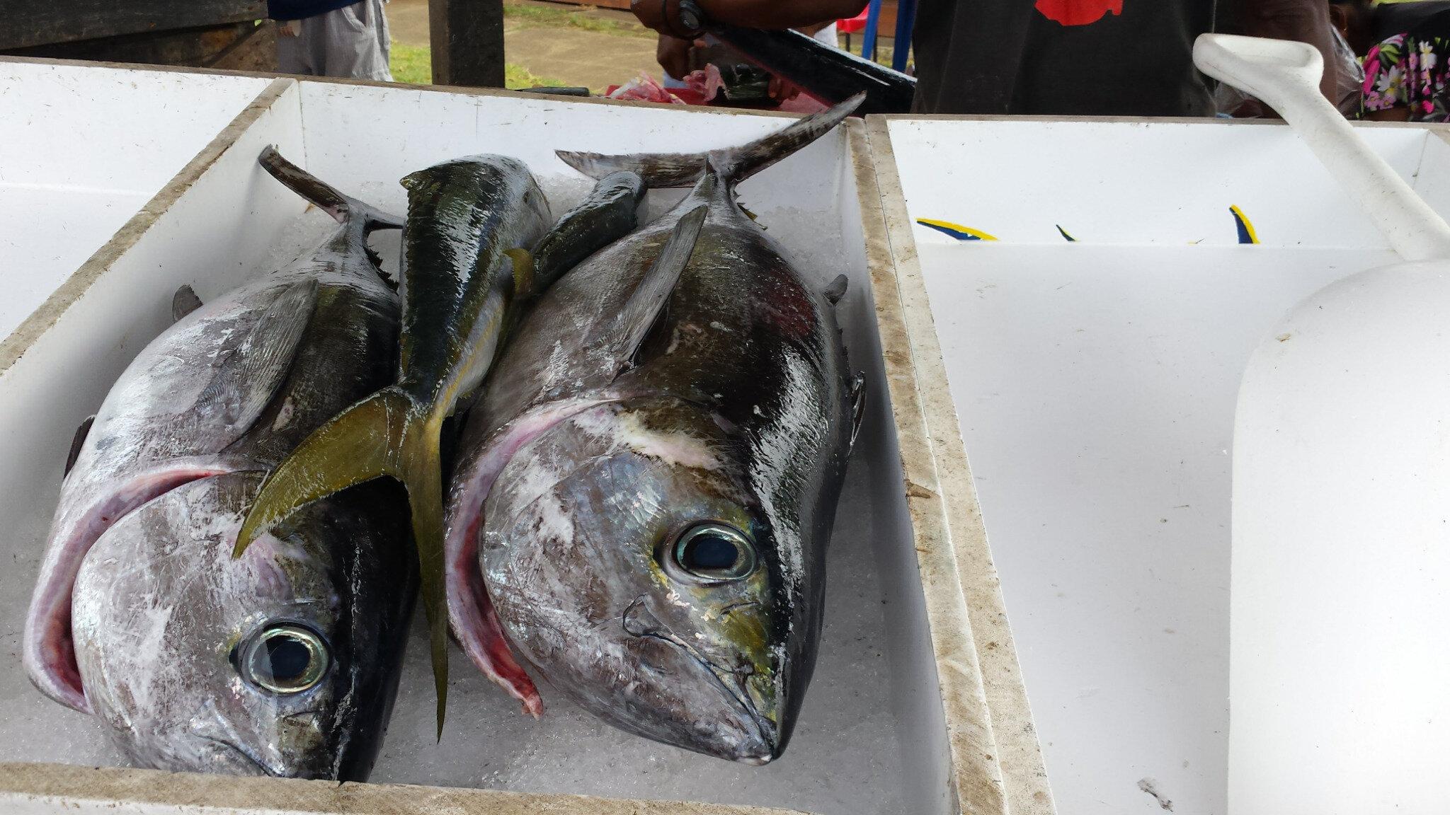 Marche aux poissons 20160514_080704