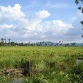 Cambodge : Les paysages
