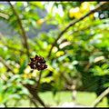 Spiderclown (2)