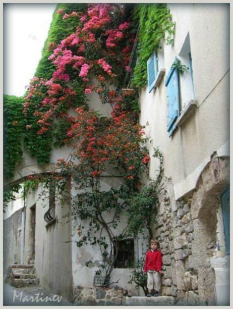 Bougainvillier rue Paradis Hyères