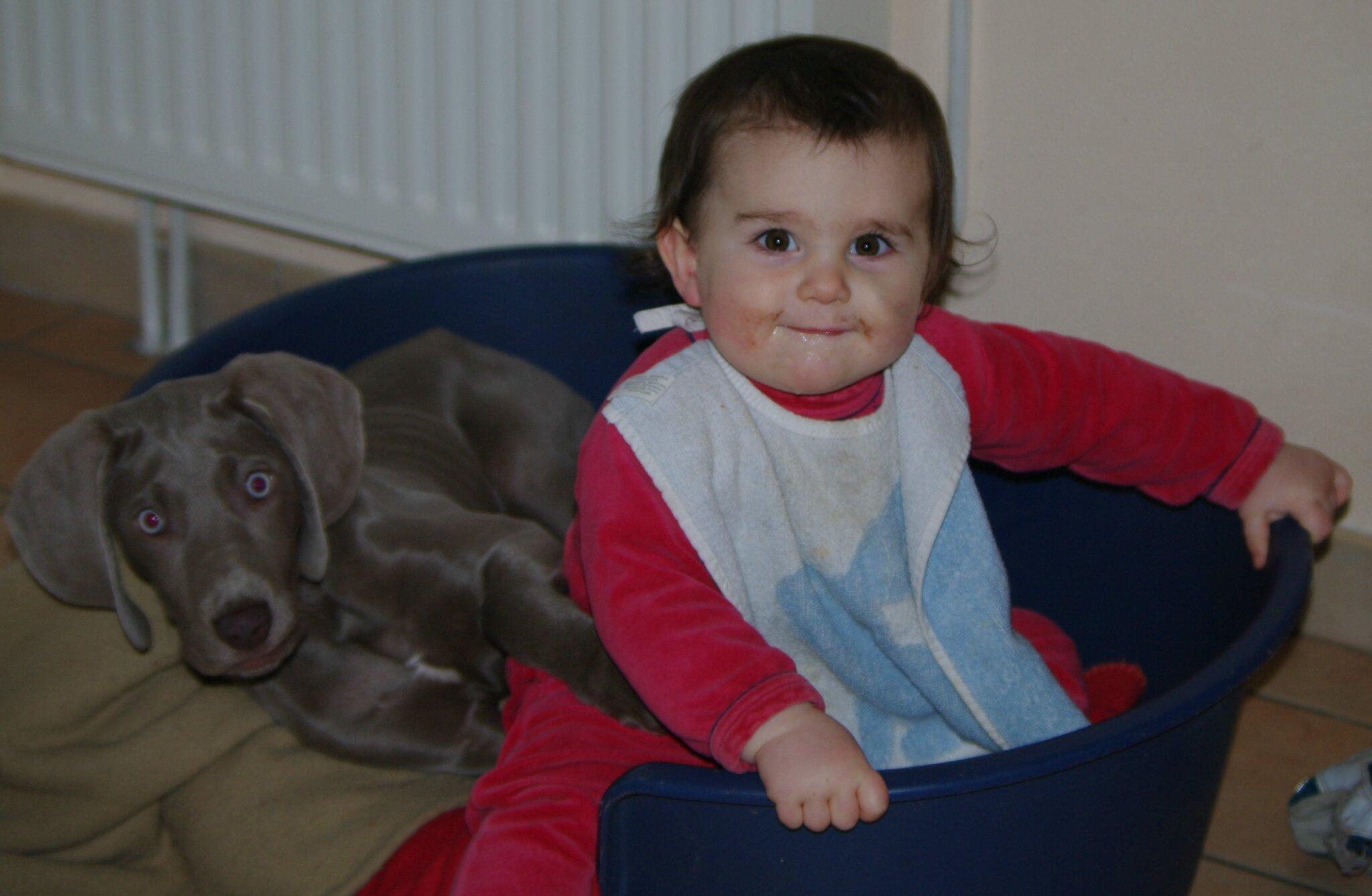 chien braque et bébé
