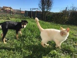 Hermia et le chat
