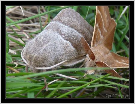 2010_06_01_Deux_papillons