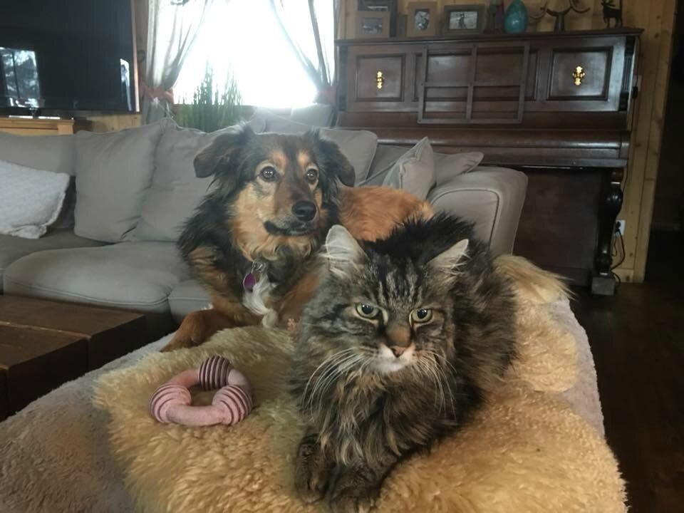 Hooki et son pote le chat