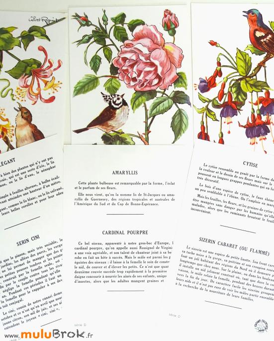 Anciennes-images-scolaires-5-Editions-éducatives-muluBrok-Vintage