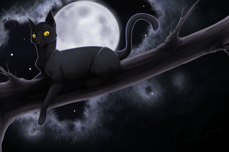 __________________moonlight_cat_______________________960669