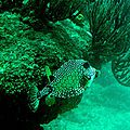 BLANQUILLA sous l'eau