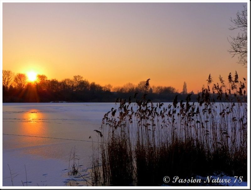 Forêt de Rambouillet sous la neige (19)