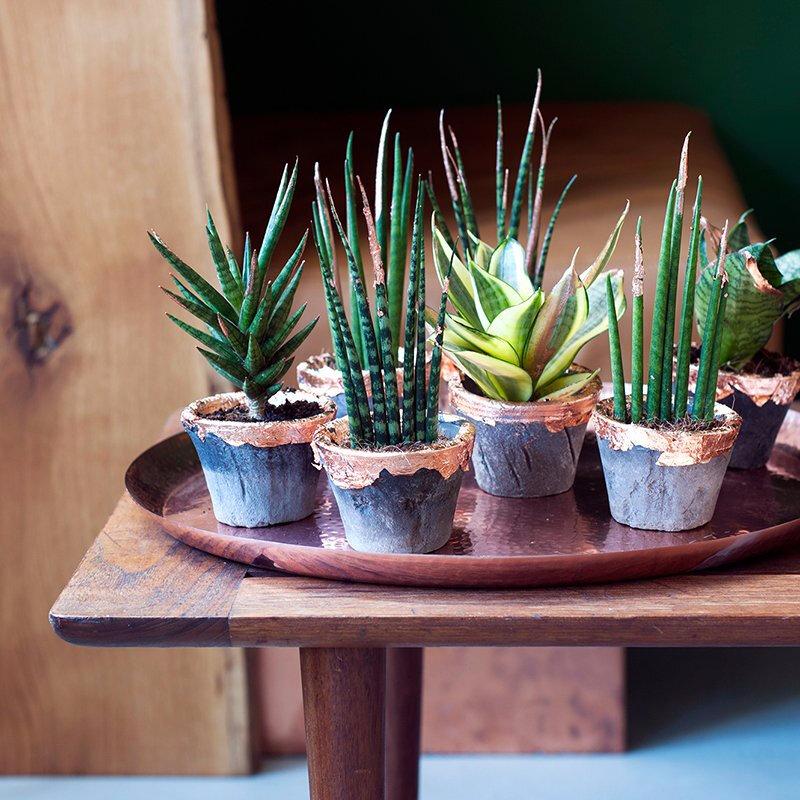 Les objets DIY-Plante cuivre