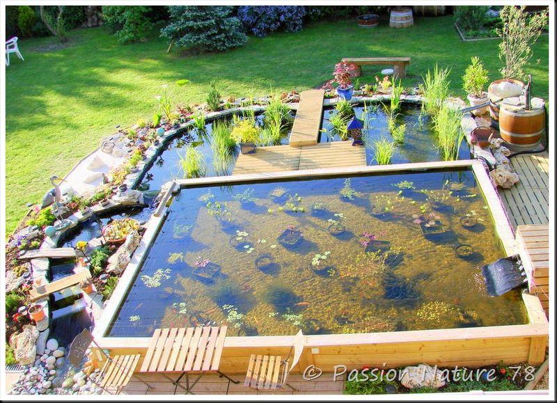 Mon bassin (1)