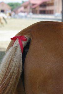 cheval qui botte un ruban rouge en noeud