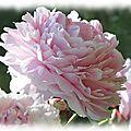 Jardins - Fleurs