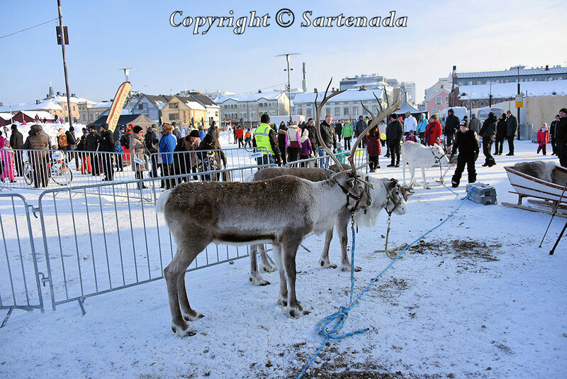 reindeer_rides_for_families_oulu_-27