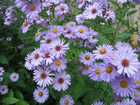 Fleurs_de_jardin_nièvre